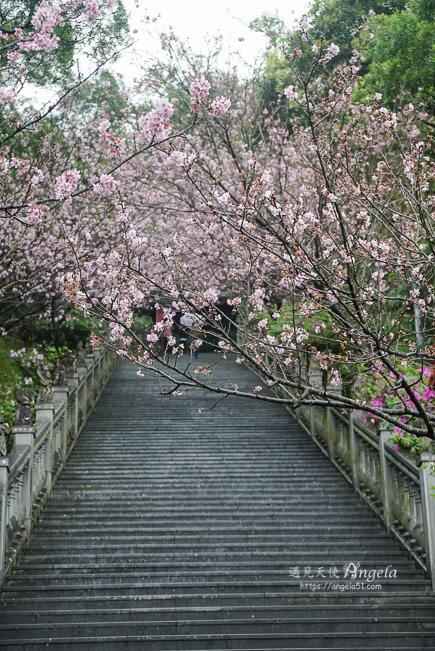 碧山巖櫻花