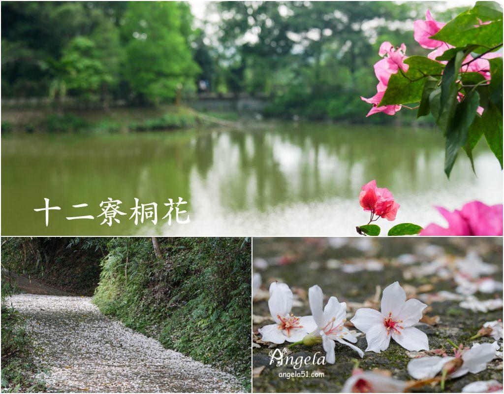 新竹桐花景點十二寮