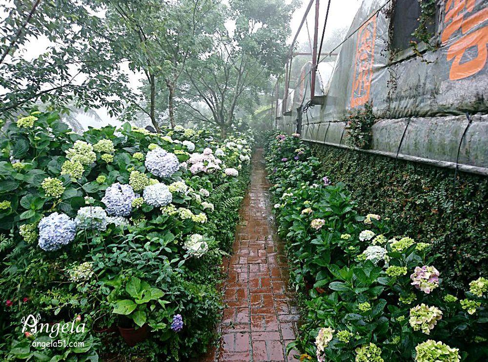 陽明山繡球花花與樹園藝