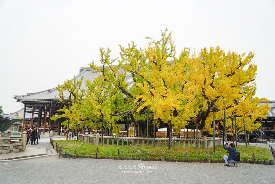 西本願寺銀杏樹
