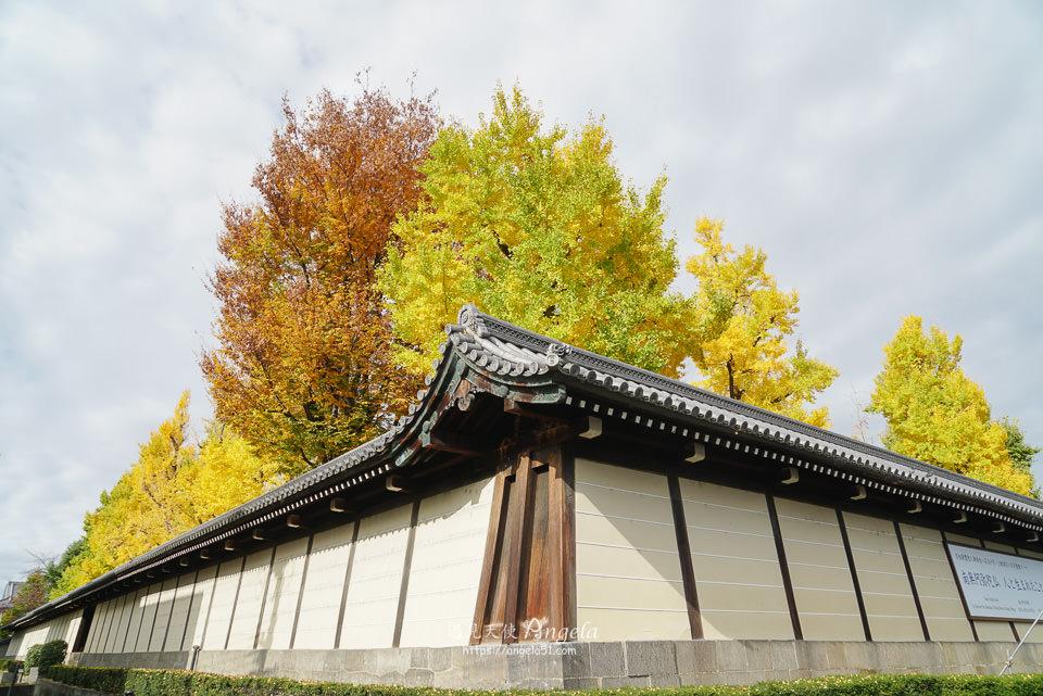 東本願寺銀杏