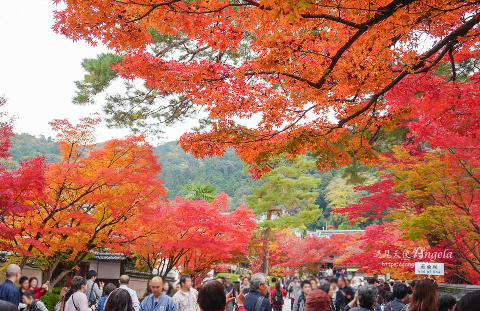 京都紅葉永觀堂