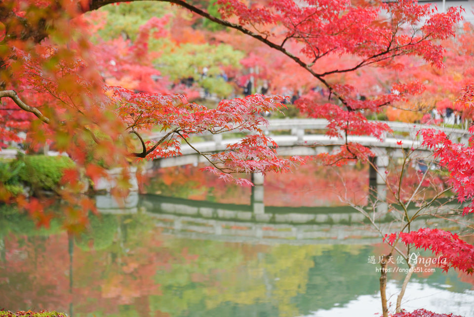 永觀堂紅葉京都景點必遊