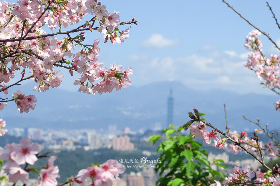 騰龍御櫻櫻花林秘境