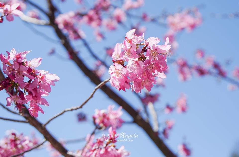 福壽山千櫻園