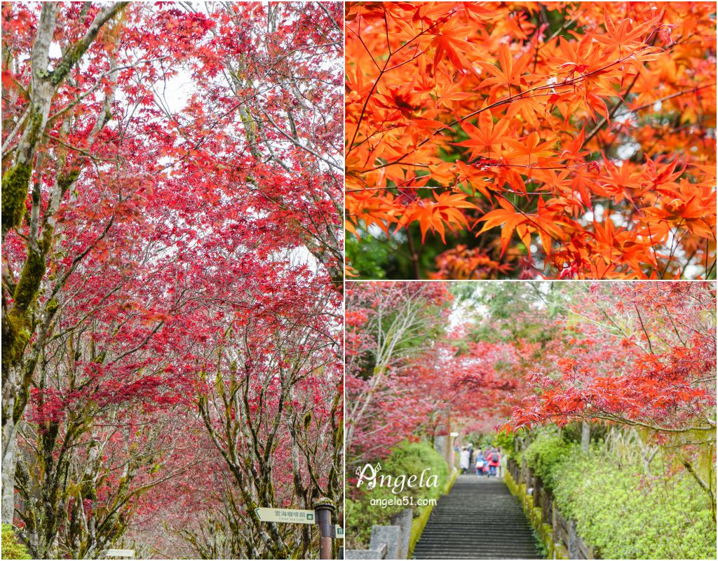 太平山紅楓葉