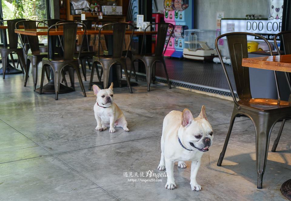 苗栗公館景觀餐廳 Doo Caffee 寵物友善餐廳