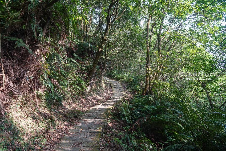 龍船岩登山步道好走