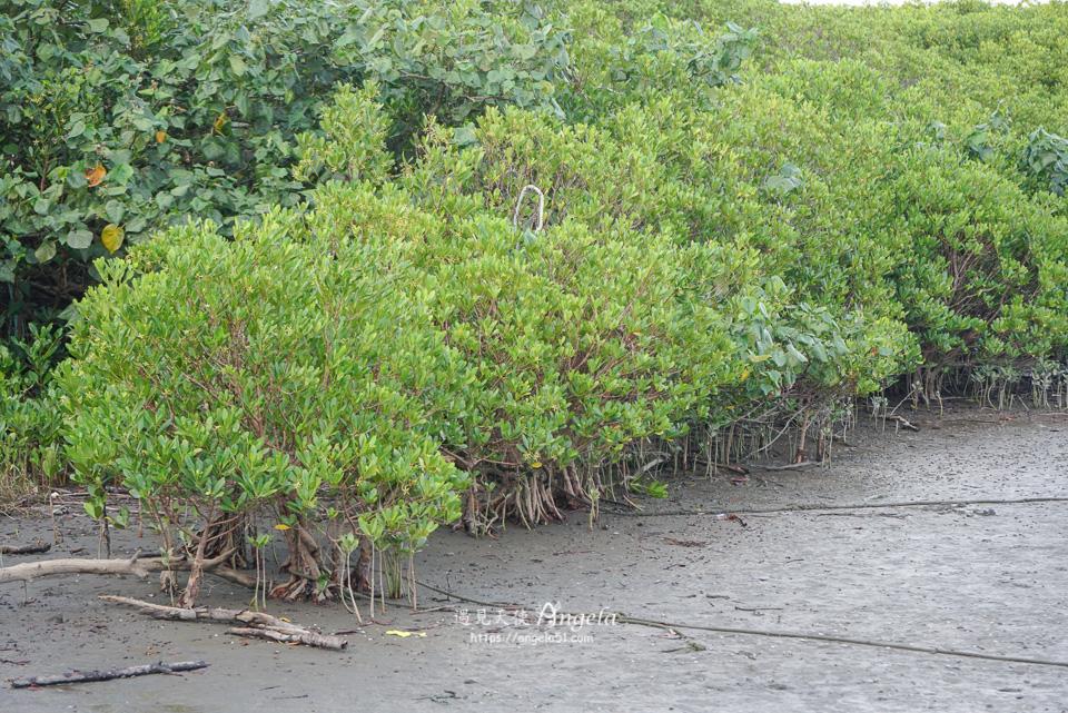 八里紅樹林景點挖子尾自然保留區