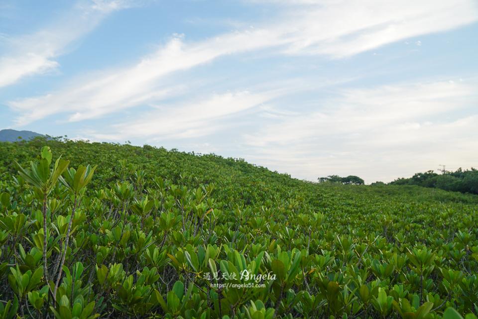 八里挖子尾自然保留區紅樹林