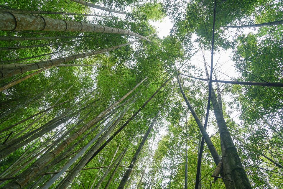 台中竹林秘境