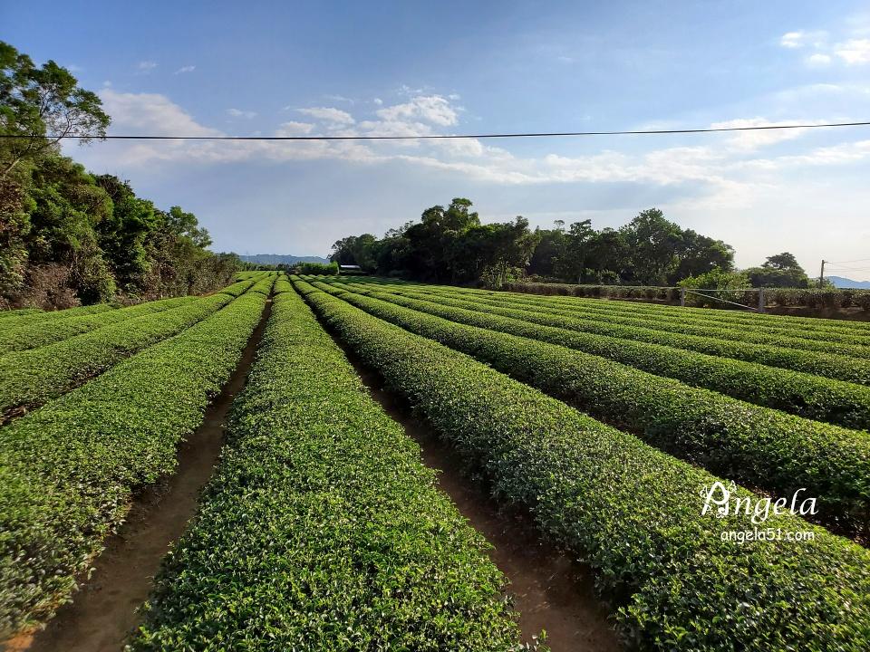 龍潭三和村茶園
