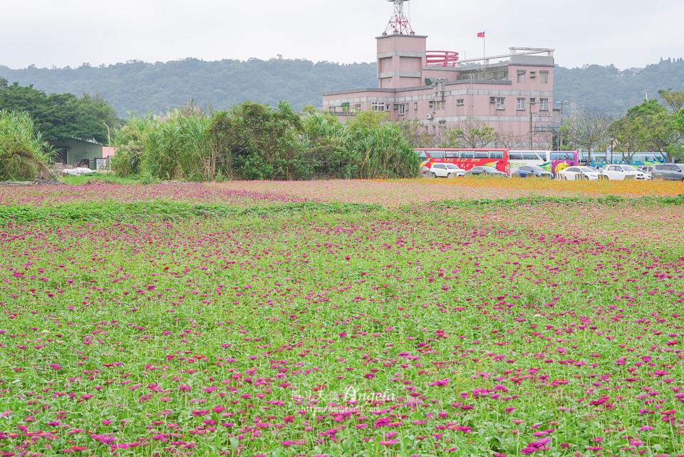 桃園花彩節大溪展區