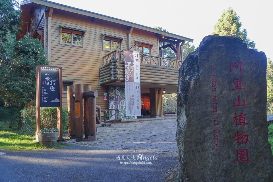 阿里山秘境茶田35號