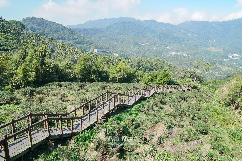 嘉義太興岩茶園步道