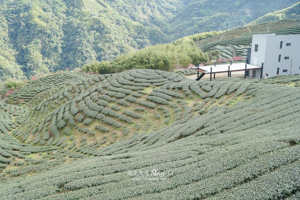 南投竹山八卦茶園