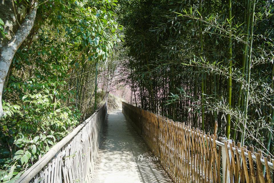 司馬庫斯巨木群步道