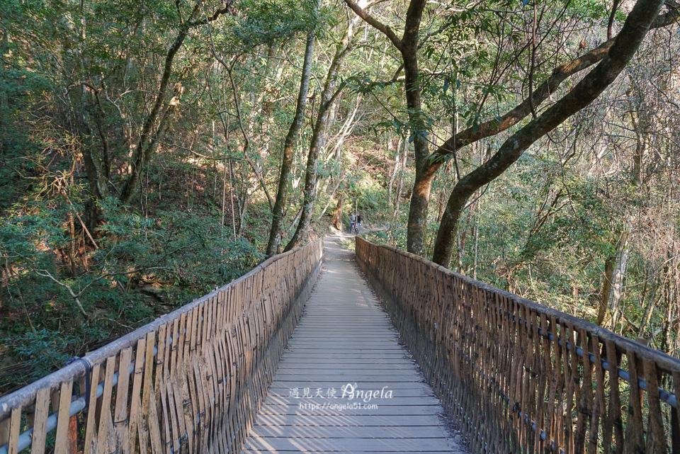 司馬庫斯巨木群步道難度
