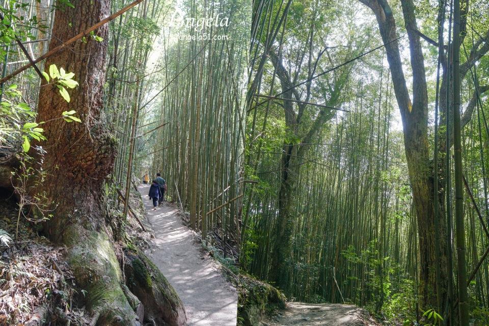 司馬庫斯巨木步道難度