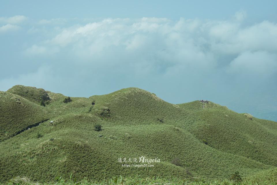 陽明山抹茶山