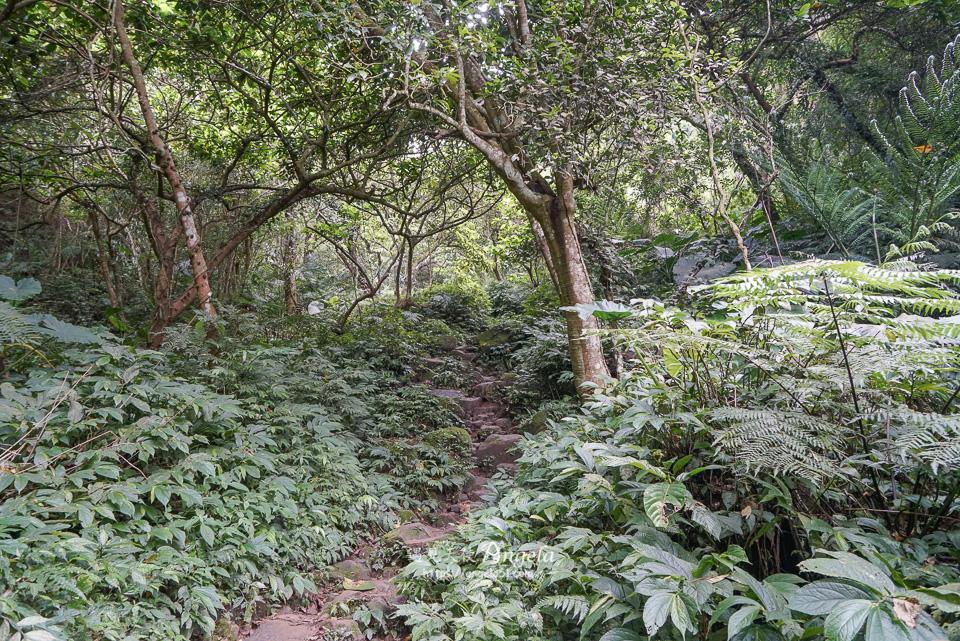 桃園石門山步道往觀音像步道
