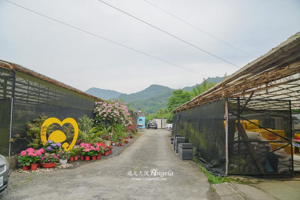桃園繡球花中興花卉農場