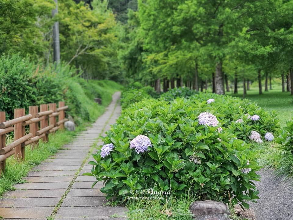 武陵繡球花步道