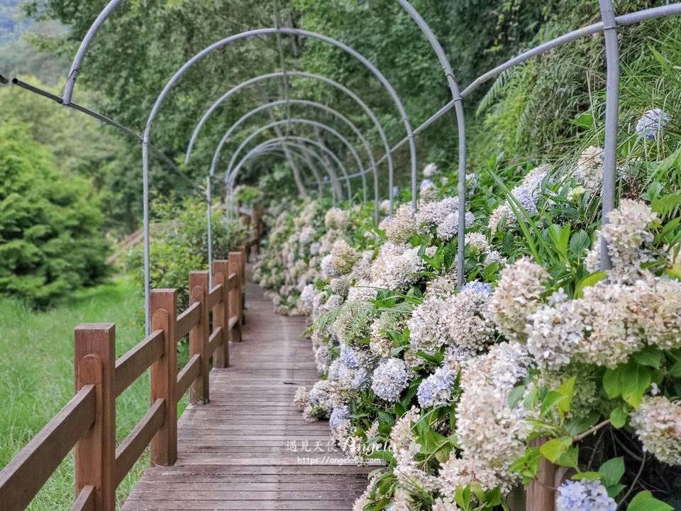 武陵農場繡球花步道
