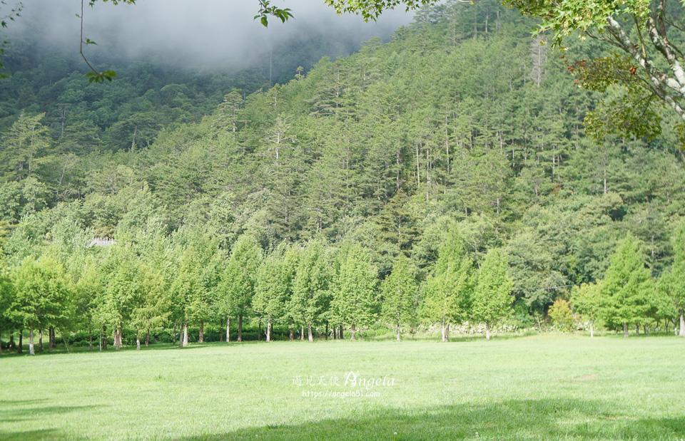 武陵農場陽光草原
