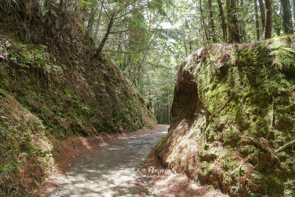 武陵桃山瀑布步道