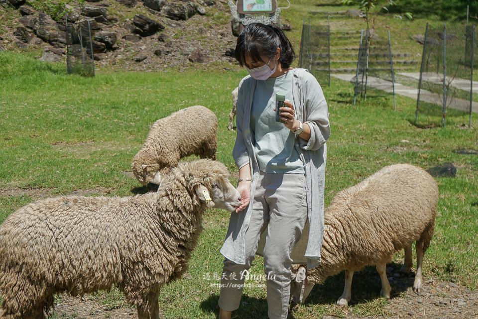 青青草原綿羊