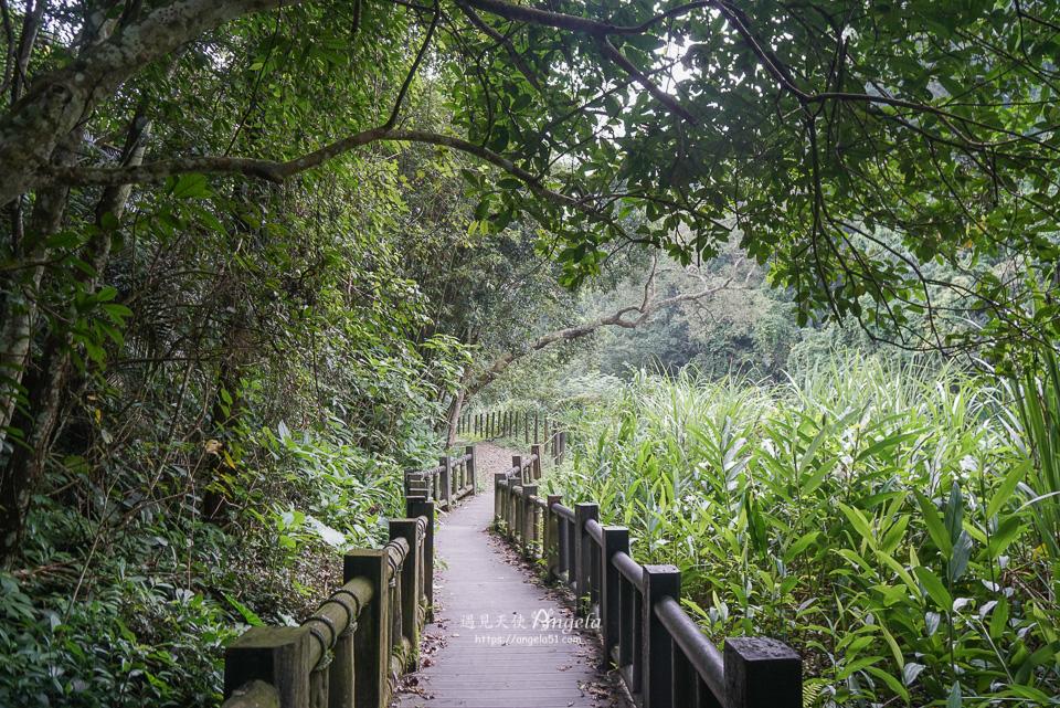 苗栗蓬萊溪護魚步道自然生態豐富