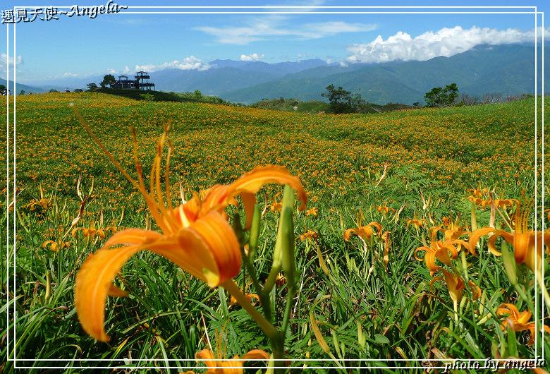 花蓮六十石山金針花季